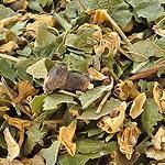 Hloh list s květem (Folium crataegi cum flore)