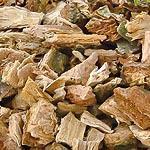 Dub kůra (Cortex quercus)