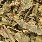Rybíz černý (Ribes nigrum folium)