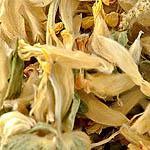 Bolhoj květ (úročník bolhoj) (Anthyllis vulneraria)