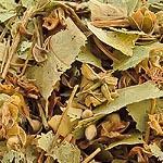 Lípa květ (Flos tiliae)