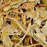 Borůvka list (Folium myrtilli)