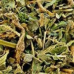 Kopřiva nať (Herba urticae)