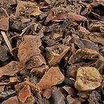 Ořech oplodí (Pericarpium juglandis)