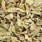 Kontryhel nať (Alchemilla vulgaris)