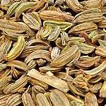 Fenykl plod (Fructus foeniculi)