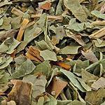 Jaterník nať (Herba hepaticae)