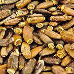 Ostropestřec plod (Fructus cardui mariae)