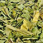 Jitrocel list (Folium plantaginis)